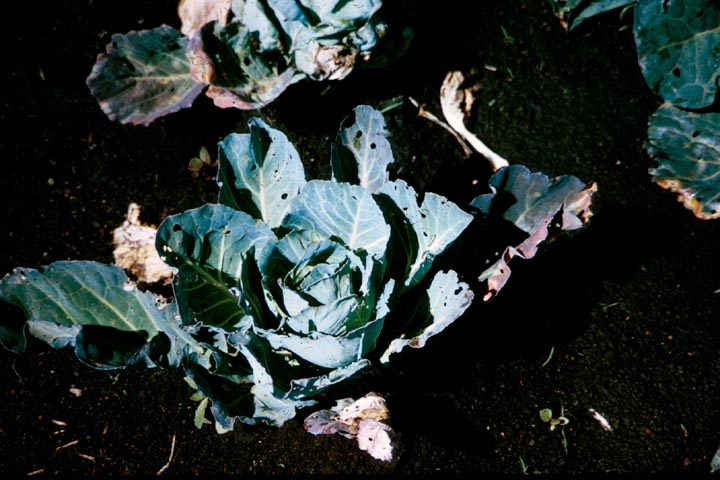 006b-png-manure-compost4