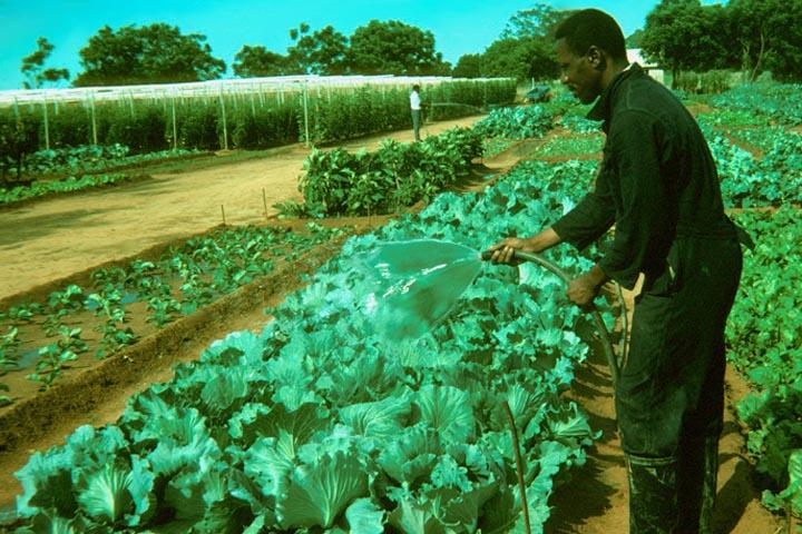 026-healthy-crops