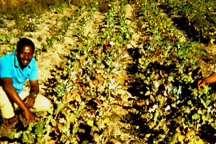 030-john-manure-compost