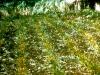 004-sick-plants-also