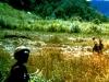 005-fighting-weeds