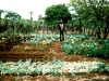 034-sanders-manure-compost2