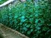 046-close-planting