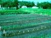 056-a-garden-appears