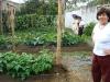 tata-tenorios-excellent-garden