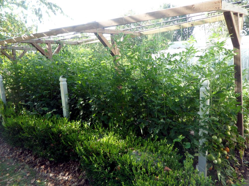 1-jims-tomatoes