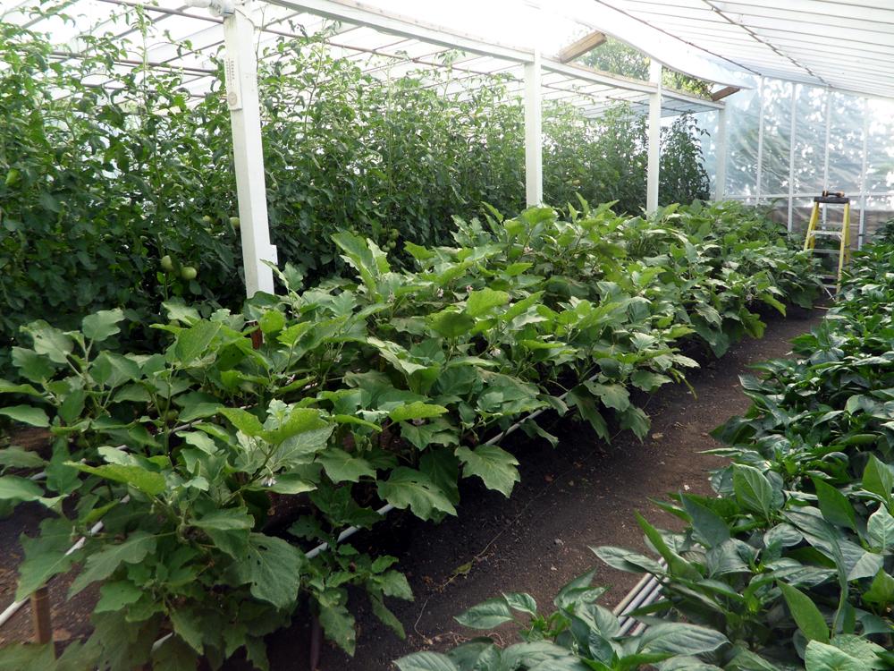 3-jims-grnhse-garden
