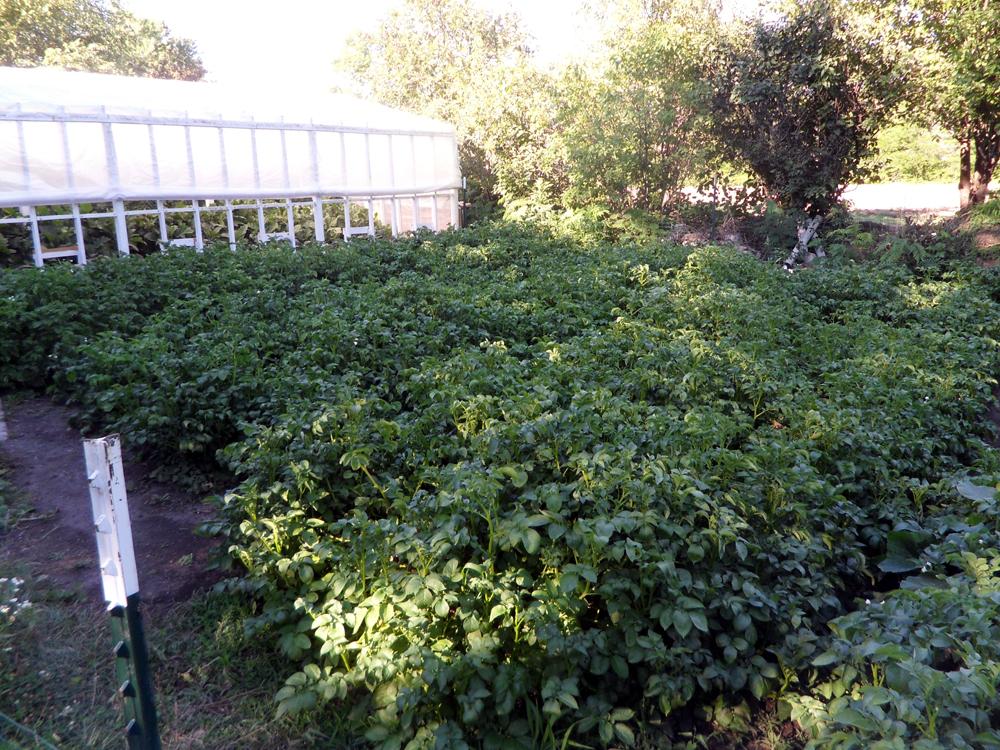 6-jims-grow-box-potatoes