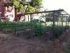 kirks-garden2