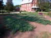 kirks-garden3