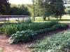 kirks-garden4