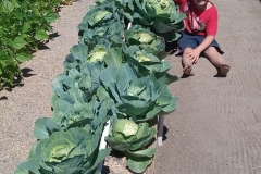 Cabbage-George