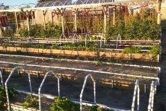 Garden_Shot_(4)