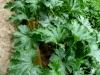 pruned-zucchini