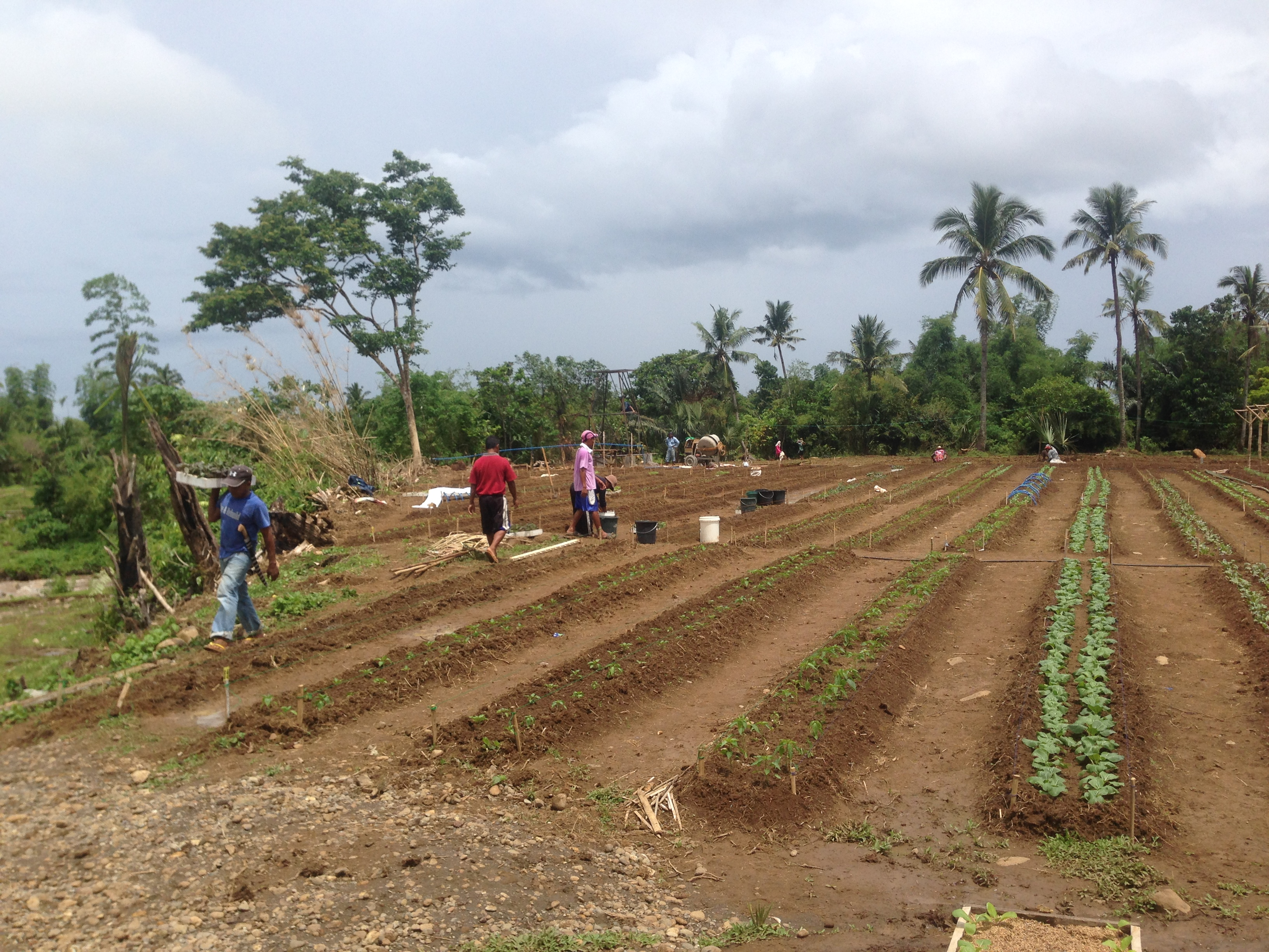 First 100 beds planted