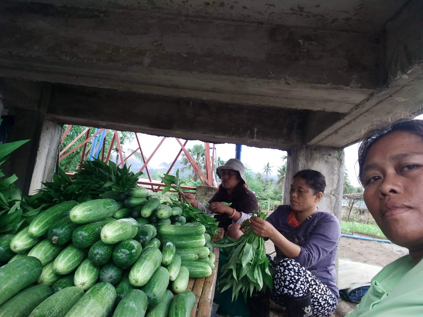 Harvest going on daily in cleaning/storage, cooling building