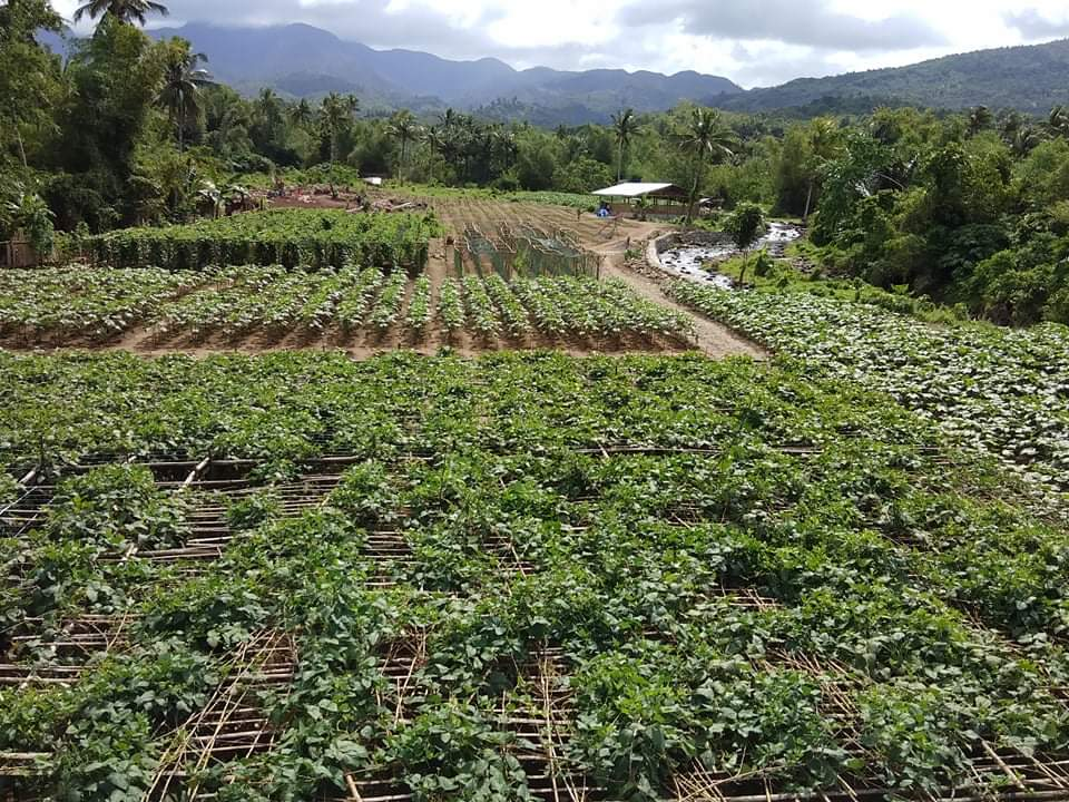 Greatly expanded garden/farm - foreground is vertical plants growing through lattice