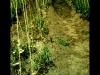 kenneth-manure-compost2