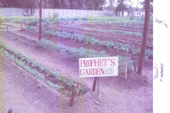 "Another Prophet's garden - Prophet counselled ""Every family should have a garden"