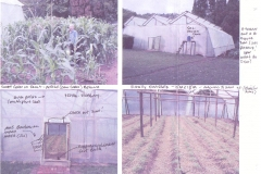 Huge greenhouse for tomatoes - not as strong as needed