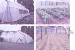 More greenhouse & crop pictures