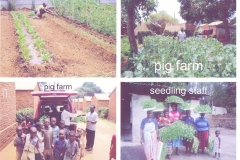 Enterprise garden, seedling staff and pig farm